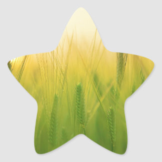 barley field asia star sticker