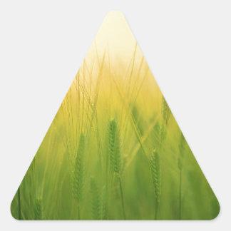 barley field asia triangle sticker