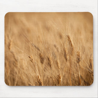 Barley field mouse pad