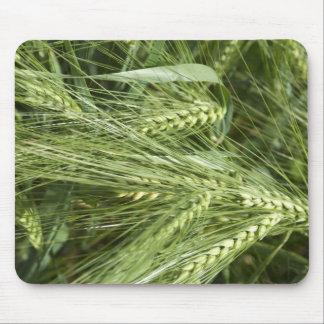Barley Field Mouse Pad
