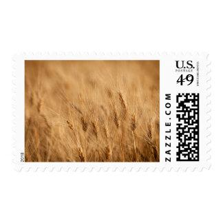 Barley field postage