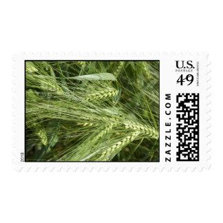 Barley Field Stamp