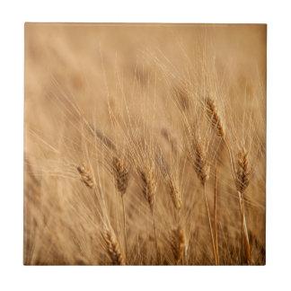Barley field tile