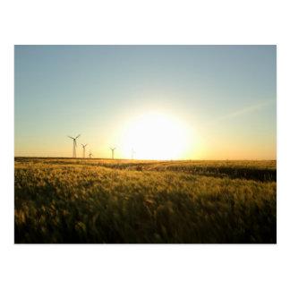 Barley fields postcard