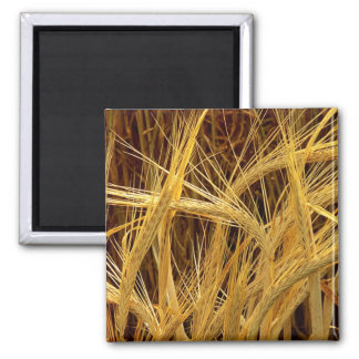 Barley Photograph 2 Inch Square Magnet