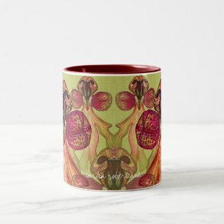 Barlia robertiana mugs