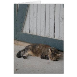 Barn cat Card