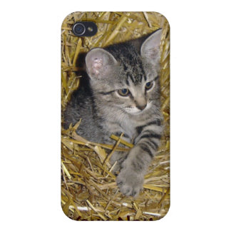 Barn Cat iPhone4 Cell Phone Case