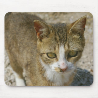 Barn Cat Mouse Pad