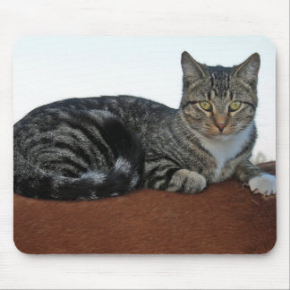 Barn Cat on Dunnit Mouse Pad