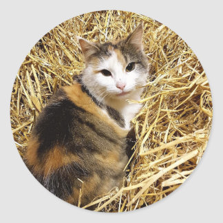 Barn Cat Photo Sticker