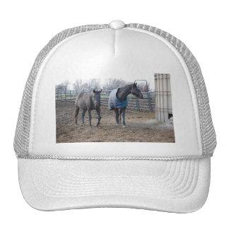 Barn Farm Horse Buddies Trucker Hat