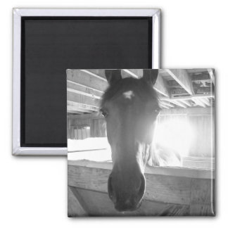 Barn Horse/Black and White Photography 2 Inch Square Magnet