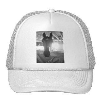 Barn Horse/Black & White Photography Trucker Hat