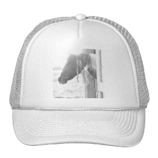 Barn Horse in Black and White Photography Mesh Hats