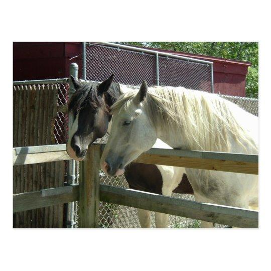 Barn Horses Postcard