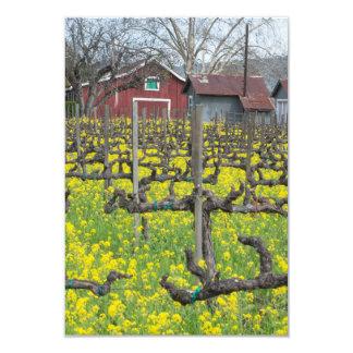 Barn In The Vineyard Card