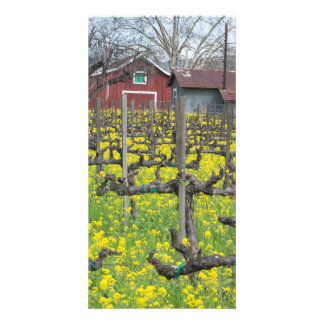 Barn In The Vineyard Photo Greeting Card