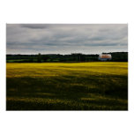 Barn in the yellow flower field print