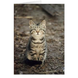 """Barn Kitten"" Animal Photo Greeting Card"