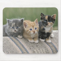 Barn Kittens on a Horse Blanket Mouse Pad