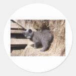 Barn kitty sticker