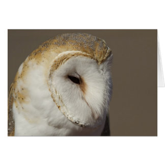 Barn Owl 2 Card