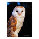 Barn Owl 2 Greeting Cards