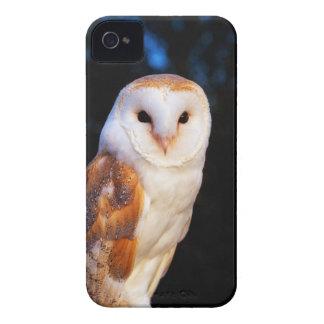 Barn Owl 2 iPhone 4 Case-Mate Case