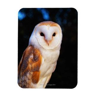 Barn Owl 2 Magnet