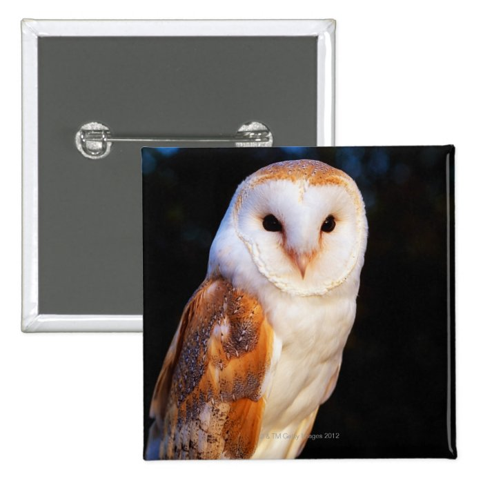 Barn Owl 2 Pinback Button