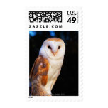 Barn Owl 2 Postage Stamps
