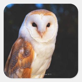 Barn Owl 2 Square Sticker
