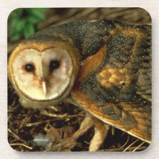Barn Owl Beverage Coaster