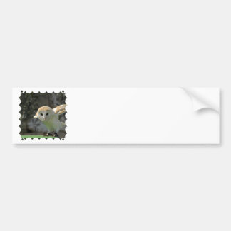 Barn Owl Bumper Sticker