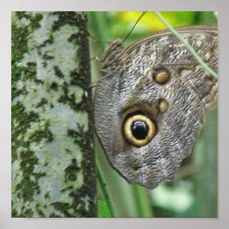 Barn Owl Butterfly Poster