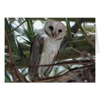 Barn Owl Card