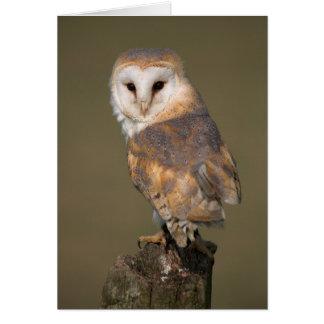 Barn Owl Card by cARTerART