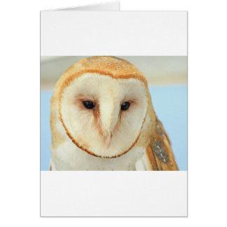 Barn Owl Cards