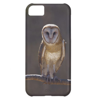 Barn Owl Case For iPhone 5C