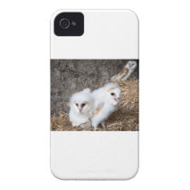 Barn Owl Chicks In A Nest Case-Mate iPhone 4 Case
