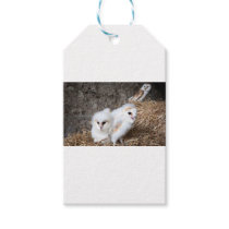 Barn Owl Chicks In A Nest Gift Tags