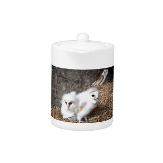 Barn Owl Chicks In A Nest Teapot