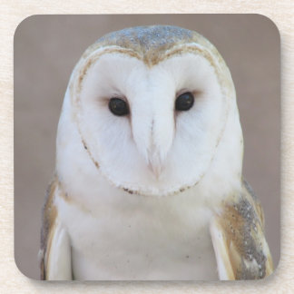 Barn Owl Coasters
