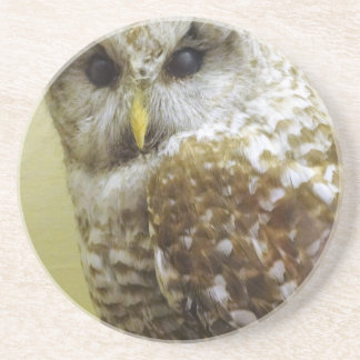 Barn Owl Drink Coaster