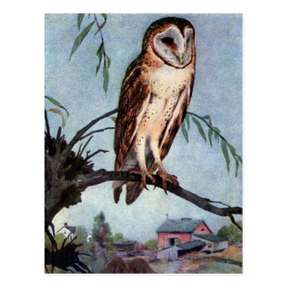 Barn Owl, Farmhouse and Barn Postcard