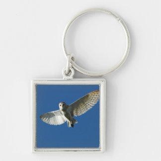 Barn Owl in Daytime Flight Keychains