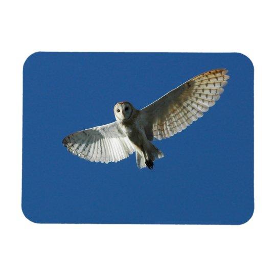 Barn Owl in Daytime Flight Magnet