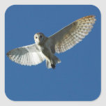 Barn Owl in Daytime Flight Square Stickers