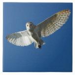 Barn Owl in Daytime Flight Tile